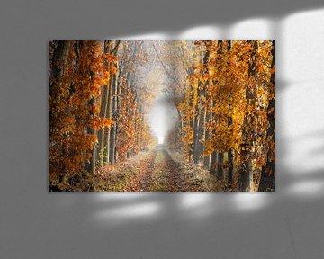 Voie de perspective un matin brumeux en automne sur iPics Photography