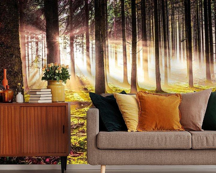 Beispiel fototapete: Herbstwald in der Abendsonne von Nicc Koch