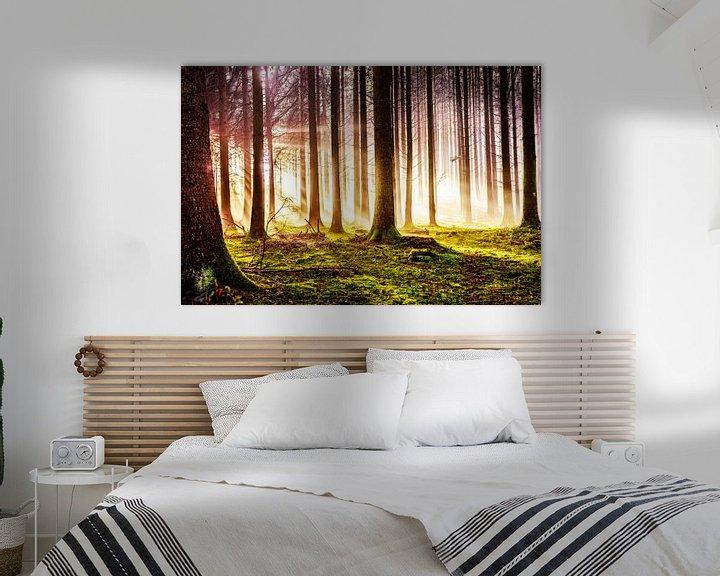 Beispiel: Herbstwald im Sonnenschein von Nicc Koch