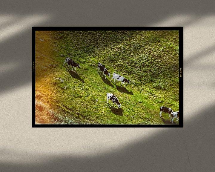 Sfeerimpressie: Koeien van Joep Oomen