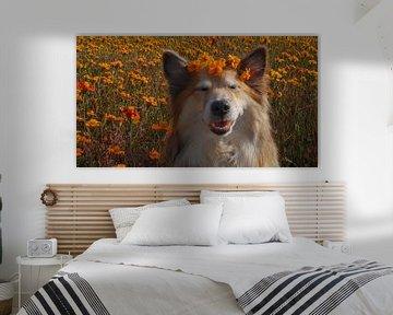 Isländischer Hund von Astrid Ingrid Wevers