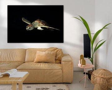 Curaçao Schildpad droom van Roel Jungslager