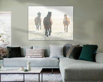 Paarden in galop