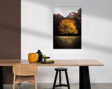 Boom bevangen door de herfstkleuren van Edzard Boonen