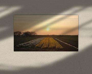 Texel Landschap 19 van Starworks Lien van der Star