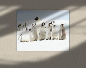 Pinguïn-kleuterklasje van Sietske Ebus-Mulders