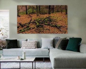 Waldspaziergang 3 von Dirk Herdramm