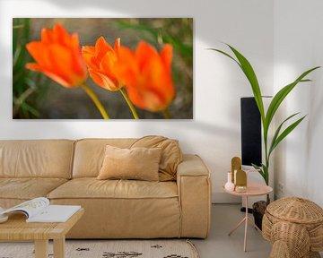 Blumenwelt von Dirk Herdramm