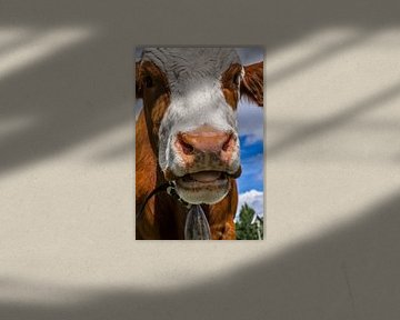 Kuh auf der Alm von Martina Weidner
