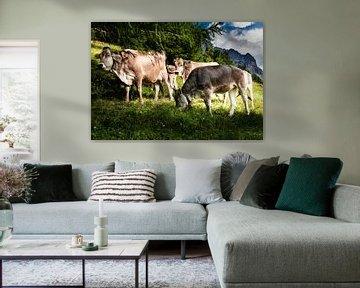 Südtirol Kuhherde auf der Alm von Martina Weidner