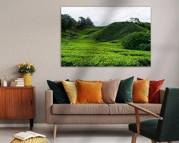 Thee plantages in Maleisië von Loes Huijnen