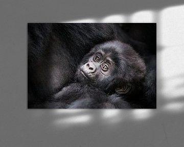 Gorilla-Baby von Jos van Bommel