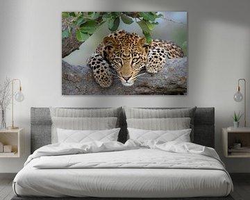 Luipaard portret van Jos van Bommel