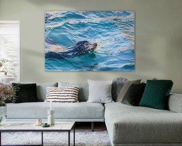 Zeeleeuw in het blauw III von Fons Simons