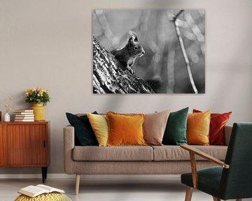 Zonnige eekhoorn von Maartje van Tilborg