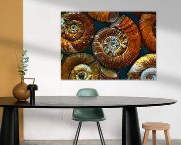 Shells of  snails van Leopold Brix