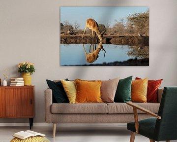 Impala bij de waterplas van Ingrid Sanders