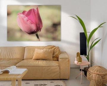 vintage en sprookjesachtige  roze tulp van Sonja Blankestijn
