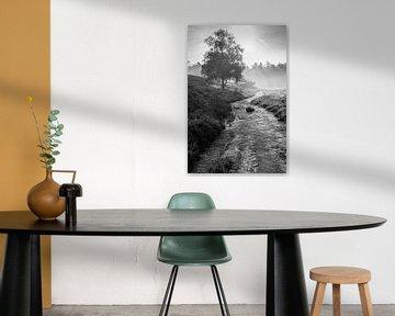 Heideweg von Koen Boelrijk Photography