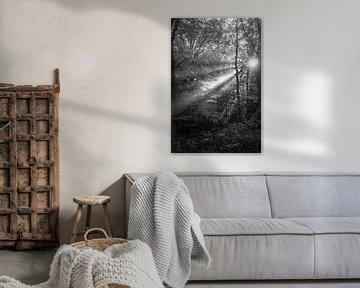 Waldstrahlen von Koen Boelrijk Photography