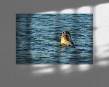 Zeehond langs Texelse Kust von Ronald Timmer