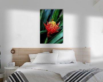 Tropische bloem van Michiel piet