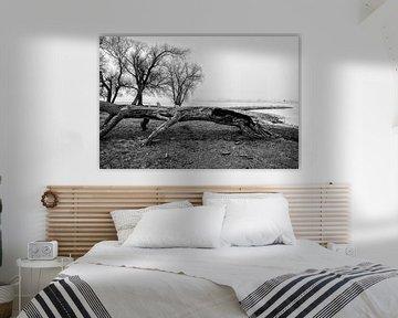 Landschap met mist en oude boom in Werkendam van Rob van der Teen