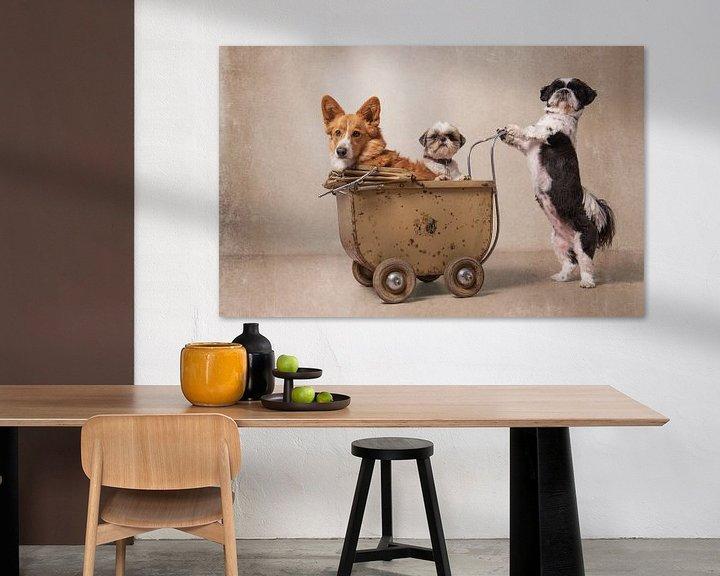 Sfeerimpressie: Hondenfamilie, Shih tzu en Gorki van Wendy van Kuler