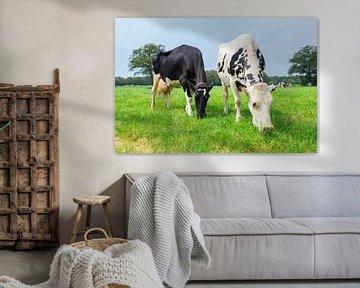 Zwei Schwarzweiss-Kühe die in der niederländischen Wiese weiden von Ben Schonewille