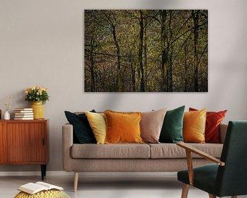 doorkijkje in donker bos van Hanneke Luit
