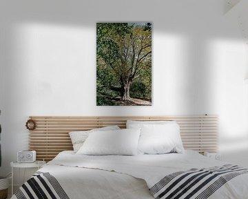 kastanjeboom in het bos von Hanneke Luit