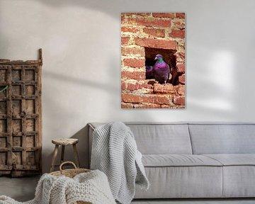 Concept nature : Dove nest in the City wall von Michael Nägele