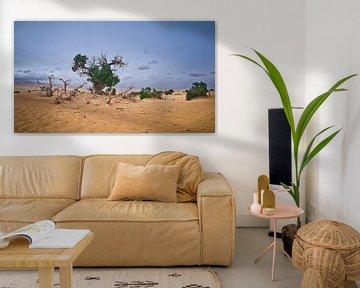 De Euphrates Populier in dorre Taklamakan Woestijn van Yona Photo
