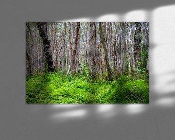 Bomen von Willem Vernes