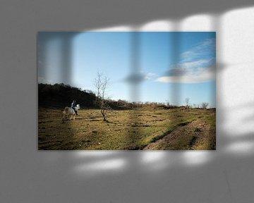 Paardrijden van Erik Reijnders