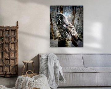 grey-owl-snow-forest-website