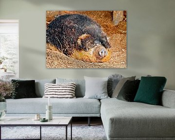 Wollschwein von Leopold Brix
