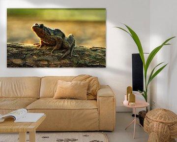 Frosch von janus van Limpt