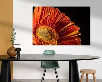 Orange im Bild von As Janson