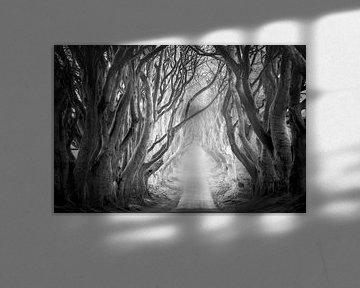 The Dark Hedges in Schwarzweiß von Roelof Nijholt