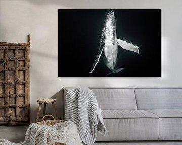 Een pasgeboren walvis komt boven om de longen met verse lucht te vullen van Koen Hoekemeijer