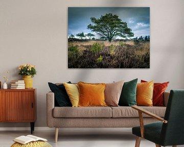 Nature walk von Wim van D