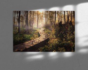 Mysterious path von Wim van D