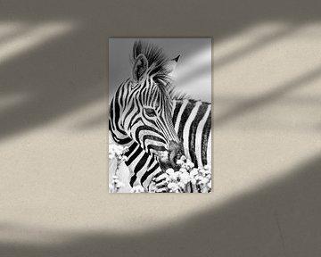 Zebra mit Blumen in schwarz-weiss von De Afrika Specialist