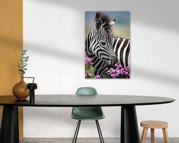 Junger Zebra mit Blumen in Farbe von De Afrika Specialist