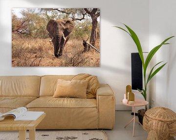 Olifant op de Savanne. van Marjo Snellenburg