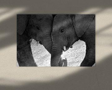 Stoeiende olifantjes. van Marjo Snellenburg