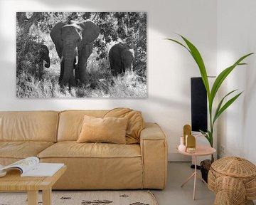Olifantenfamilie in zwart-wit. van Marjo Snellenburg