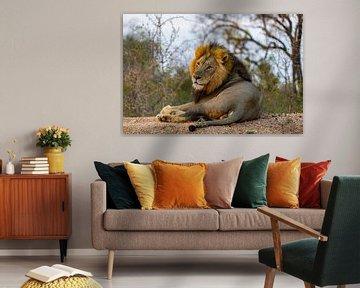 De Leeuw van Willem Vernes