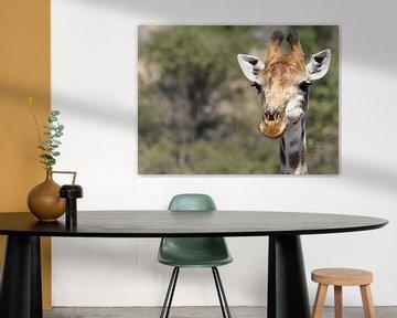 Portret Giraffe op de Savanne van Marjo Snellenburg